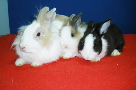 Juanita, Goku y Giulietta