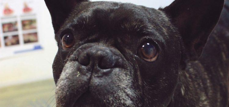 Cuidando los ojos de nuestros perros