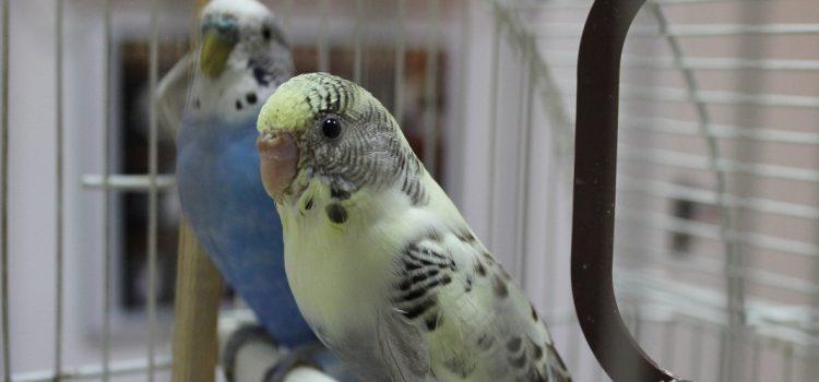 Las importancia de alimentar bien a nuestras aves