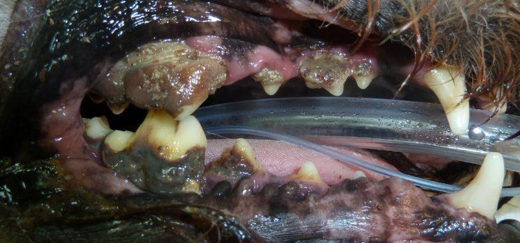 El sarro y la limpieza dental