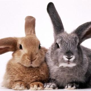 Planes para conejos