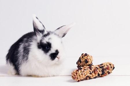 10 Cosas que tu conejo NO necesita (y que pueden ser perjudiciales).